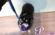 Load image into Gallery viewer, Puppingtons Bouncing Billy's Treat Ball