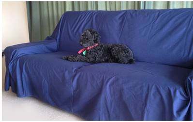 WATERPROOF FLAT SHEETS – FOR PETS (from Brolly Sheets)