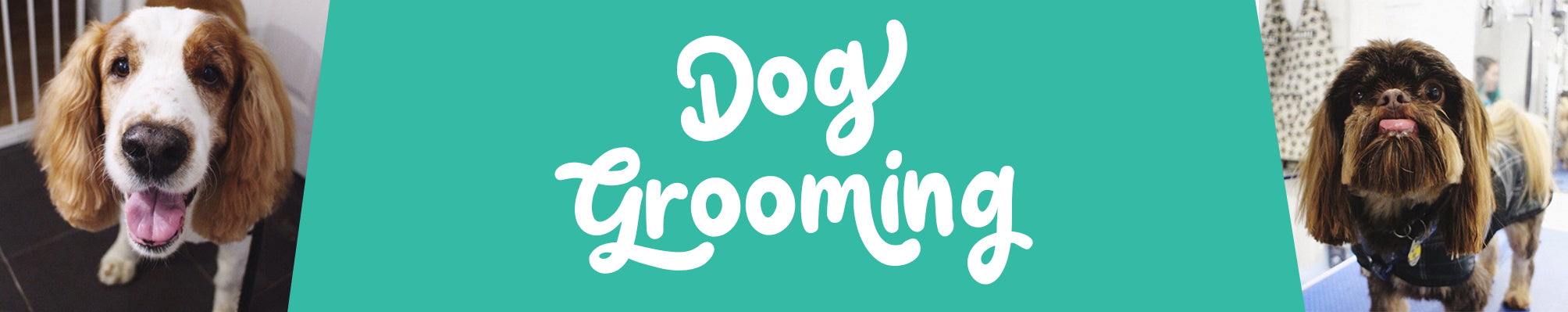 Dog Grooming Cumbernauld | Book An Appointment | Underdog Pets
