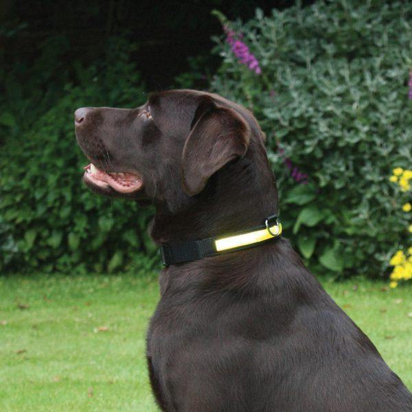 Rosewood Yellow Flashing Dog Collar