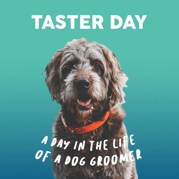 Dog Groomer Taster Day - Underdog Pets