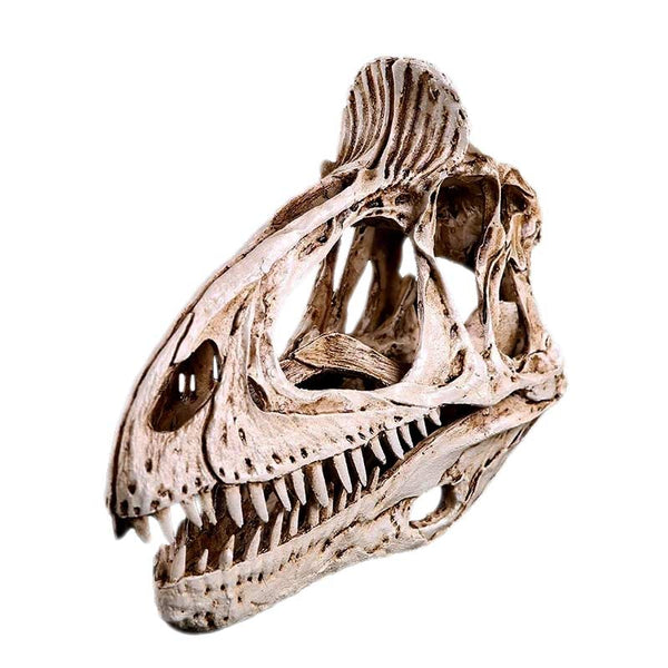 Cryolophosaurus : <br> Reproduction du crâne - Squelette Fossile Shop