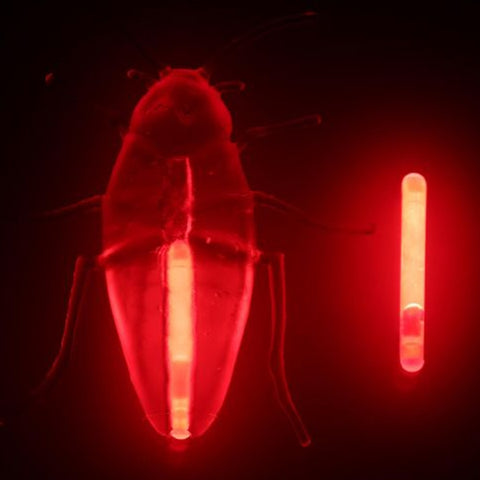 Image of Halloween Glow Bug