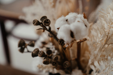 brown cotton flowers