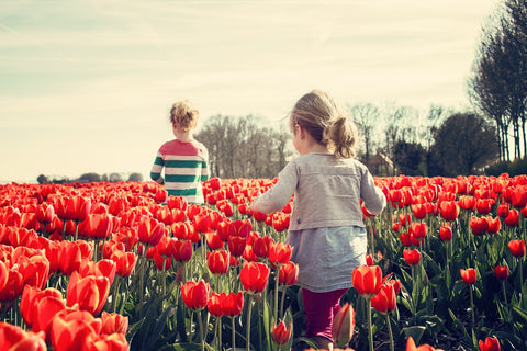 toddlers walking in the field of tulips