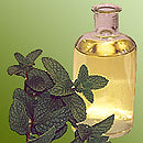 peppermint oil and mint plant