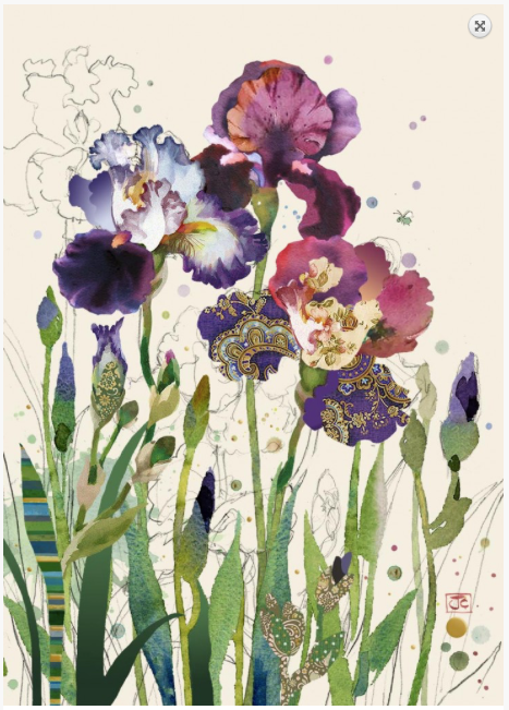 Mixed Irises