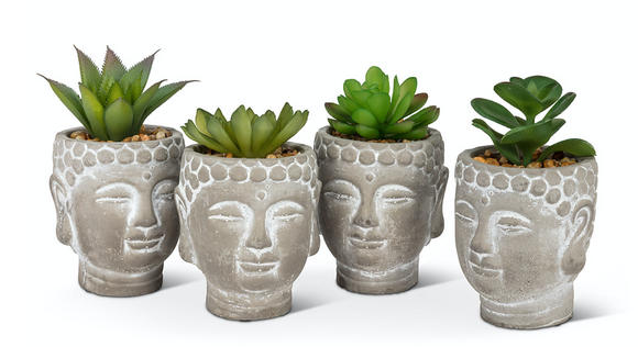 Succulent in Buddha Head Pot