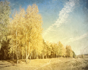 Autumn light by Sergey Nivens, digital canvas print, various sizes