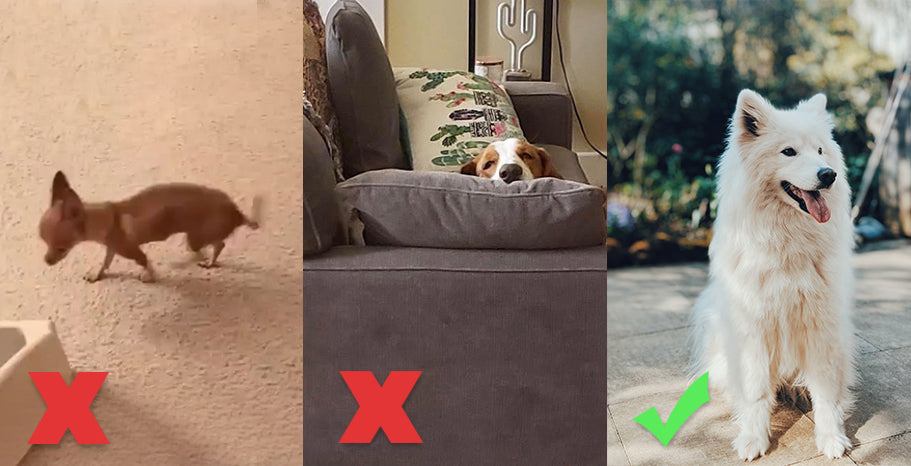 picture guide for pet products