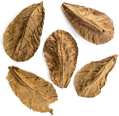 ATR INDIAN ALMOND LEAVES 10 Pack