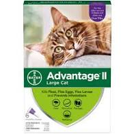 Advantage II Large Cat 4 pk 0.8ml
