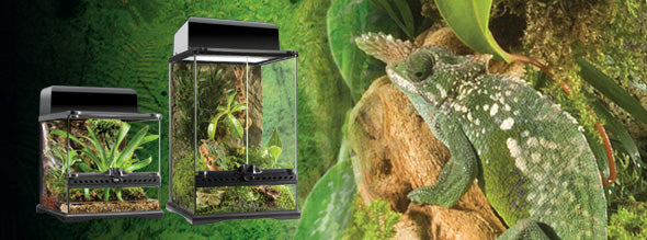 Exo Terra Terrarium Mini Wide Tall, 12