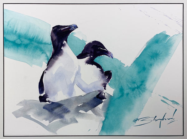Cliff Top, Razorbills - Original Painting