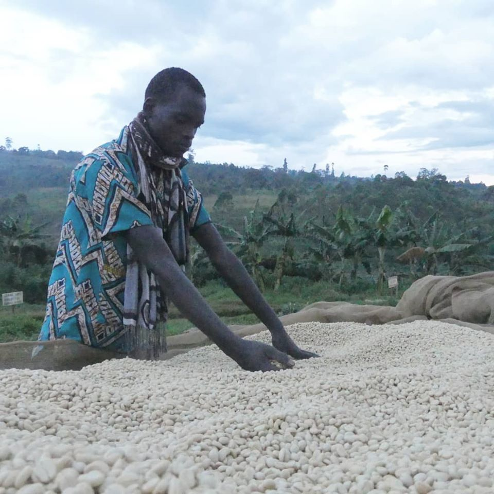 A Journey From Burundi to Your Cup