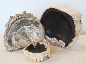 Wonderwall Petrified Wood tray or bowl