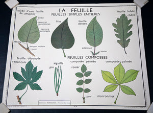Wonderwall Home Decor and Fine Furnishings Les Tiges & La Feuille French Botany Poster
