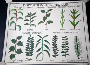 Disposition De Feuilles & Les Fruits French Botany Poster by Wonderwall Home Decor