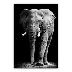 The Magnificent Safari Collection : Elephants (Unframed)