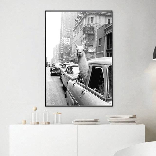 The Impressive Photo Collection: Alpaca Taxi (Unframed)