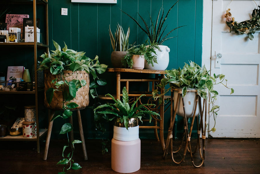 Make Your #WFH Office Instagram-Worthy with These Versatile Viney Plants