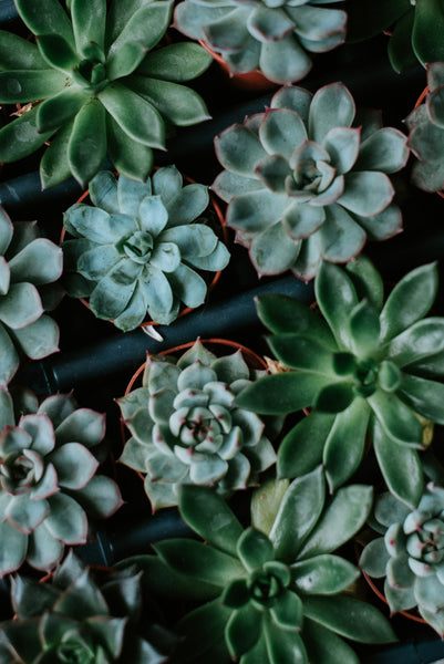 5 Ways You're Killing Your Succulent