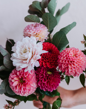Load image into Gallery viewer, Dahlia Bunch