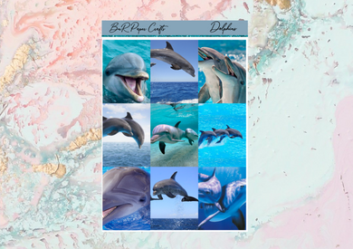Dolphins Deluxe kit | Standard Vertical Planner Stickers