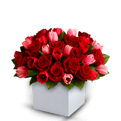 BEAUTYFULL FRESH RED ROSES, PINK TULIPS, RED TULIPS ARRENGEMENT