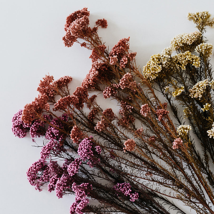 Long Rice Flower (Achillea Preserved)