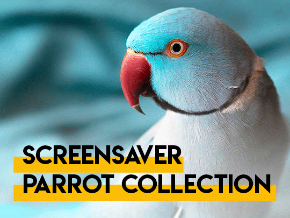 Screensaver Parrot Collection