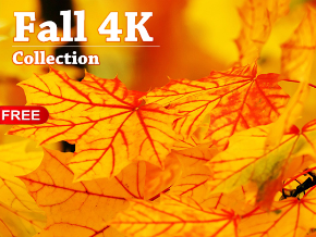 Fall 4K Collection