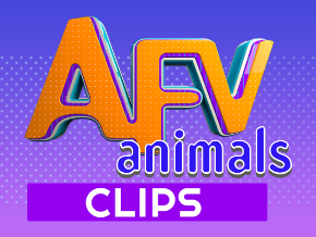 AFV Animals-Animal & Pet Video