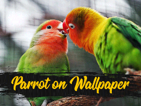 Parrot on Wallpaper