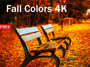 Fall Colors 4K