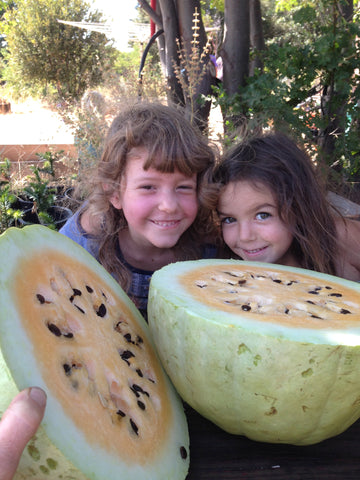 Desert King watermelons are sweet and juicy!