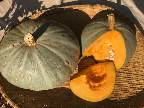 Sweetmeat Oregon Homestead Squash
