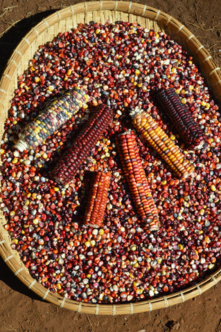 Painted Mountain Flour Corn