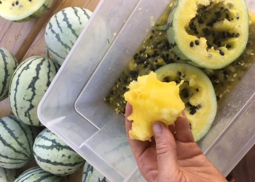 New for 2021- These Candystick Delicata are sweet and meaty with great storage for winter eating!