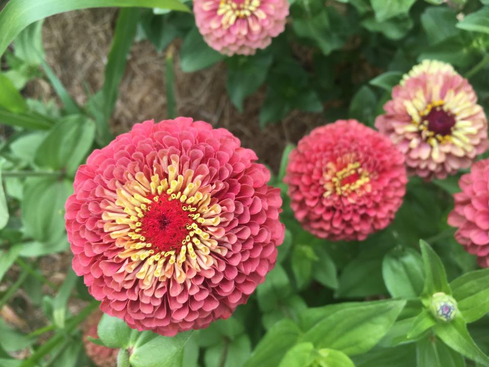 Spring is a great time to sow beets! Check out our selection. We love these roasted or grated on a salad.