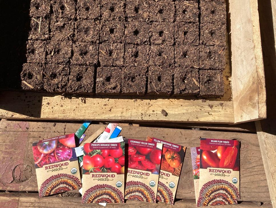 Returning for 2021- Zapotec Pleated tomatoes are a long time farm favorite. These large pleated fruits contain very little water. They are gorgeous sliced, resembling a lacy doily. These originate from the mountains of Oaxaca, MX and are prolific producers.