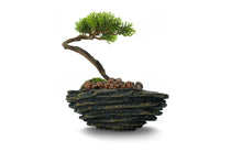 Load image into Gallery viewer, Artificial Cactus And Bonsai Garden Models Nakata, Kobe, Mito 12 CM