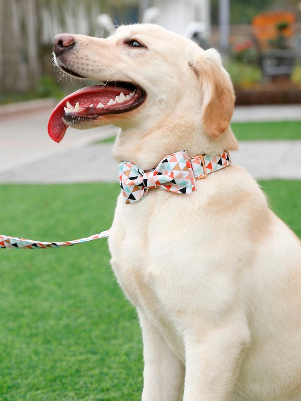 Unique Style Dog Collar and Leash Set with Bow Tie