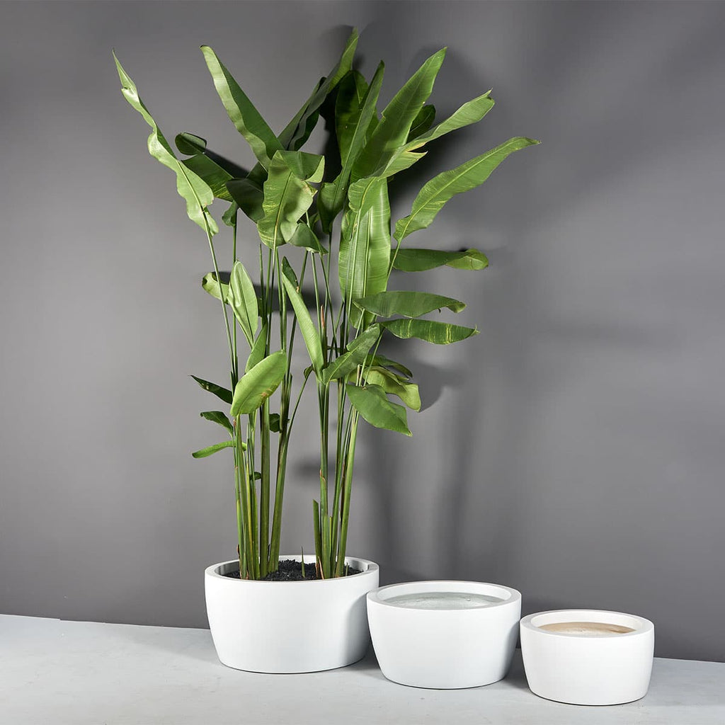Casablanca Bowl Planter