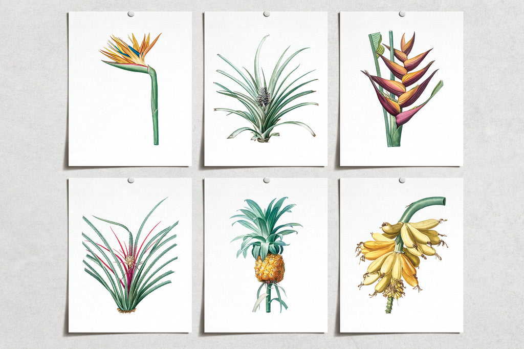 Vintage Flower Lily Pineapple Banana Prints (6) | Modern Wall Art | Wall Art Decor Prints | Room Wall Decor | YP-1025