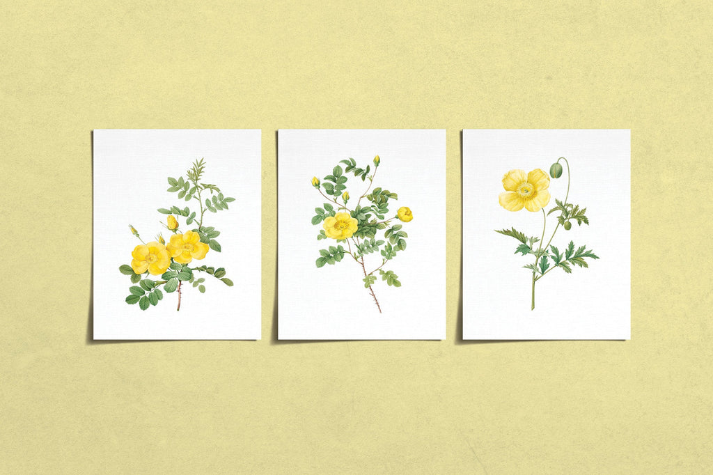 Vintage Yellow Flower Prints (3) | Modern Wall Art | Wall Art Decor Prints | Room Wall Decor | YP-1001-B