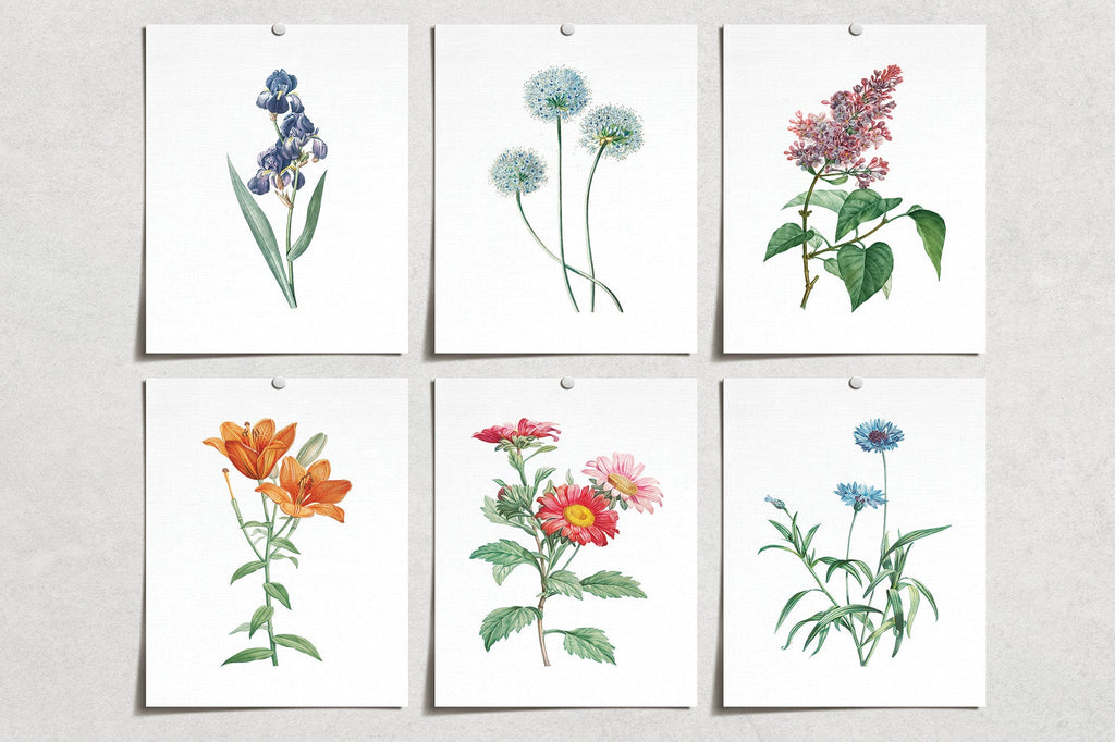 Vintage Flower Blue Leek Iris Lilac Lily Red Aster Cornflower Prints (6) | Modern Wall Art | Wall Art Decor | Room Wall Decor | YP-1024