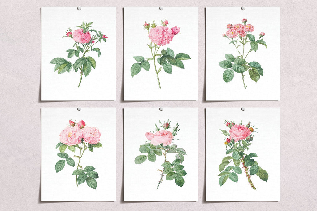 Vintage Pink Rose Flower Prints (6) | Modern Wall Art | Wall Art Decor Prints | Room Wall Decor | YP-1002