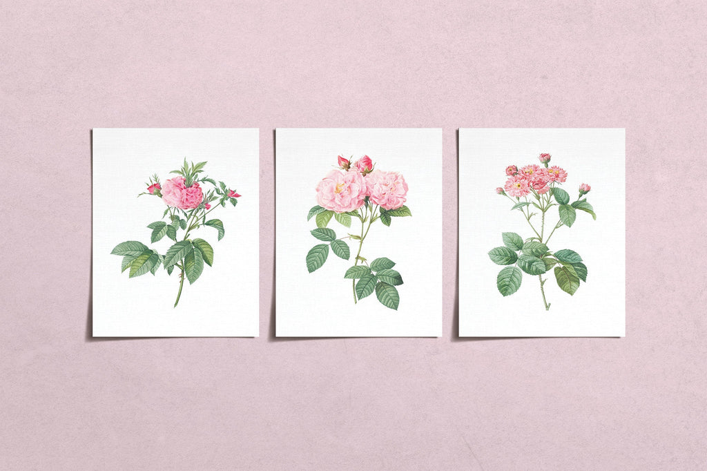 Vintage Pink Rose Flower Prints (3) | Modern Wall Art | Wall Art Decor Prints | Room Wall Decor | YP-1002-A