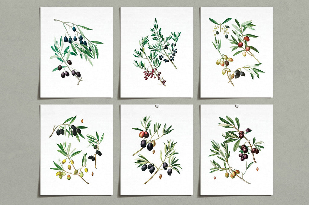 Vintage Olive Flower Prints (6) | Modern Wall Art | Wall Art Decor Prints | Room Wall Decor | YP-1012